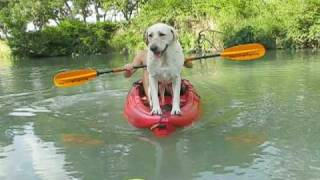 Dog Kayaking On The River In Texas, Part 1 - Moronic Adventures