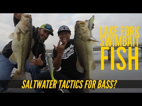 Fishing CA Style Swimbaits On Lake Fork, Texas For Largemouth Bass