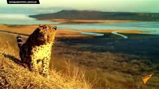 Амурский тигр и дальневосточный леопард попали в фотоловушку в окрестностях Владивостока