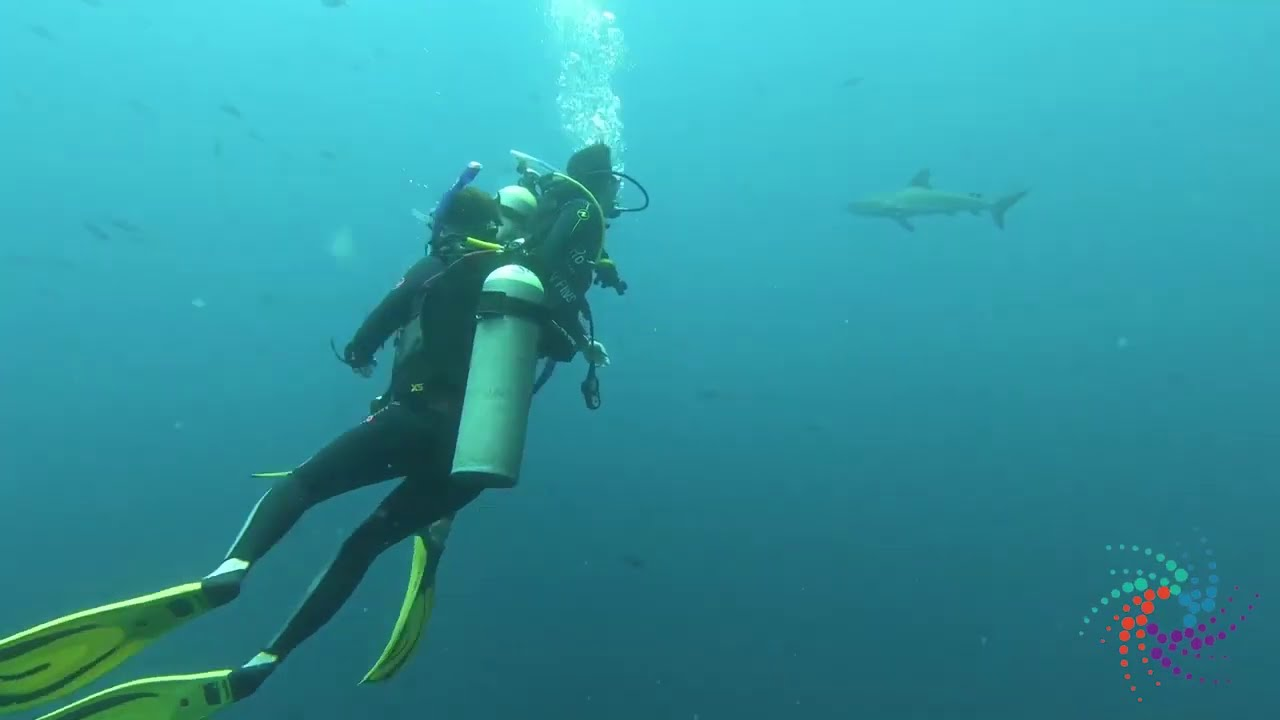 Diving With Sharks in Palau | Phildiz World Travel Show with Phil Dizon