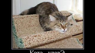 Забавные кошки.  Демотиваторы про котэ.