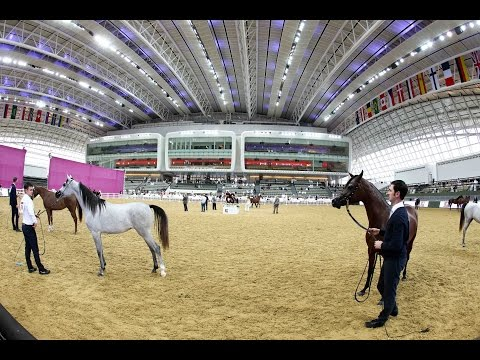 2nd Qatar National Arabian Peninsula Horse Show for Individu