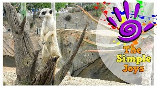 Australia Zoo Starring Robert & Terri Irwin