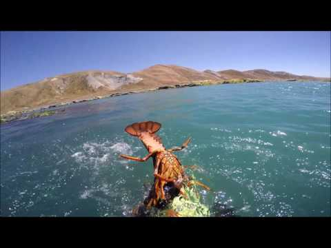 Cape Campbell Cray diving Jan 2017