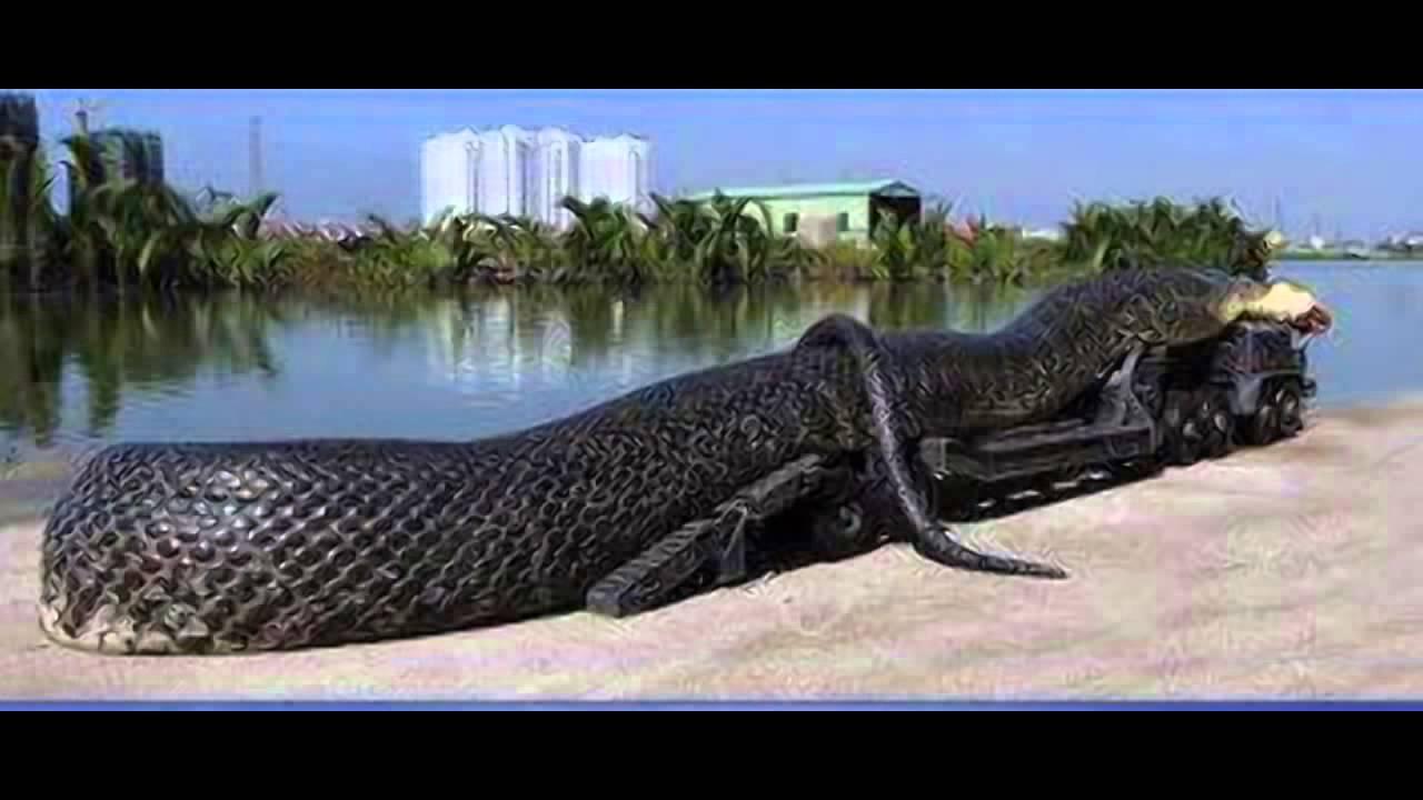 какая самая большая змея в мире фото