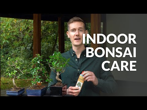 How To Make Bonsai On The Cheap Youtube