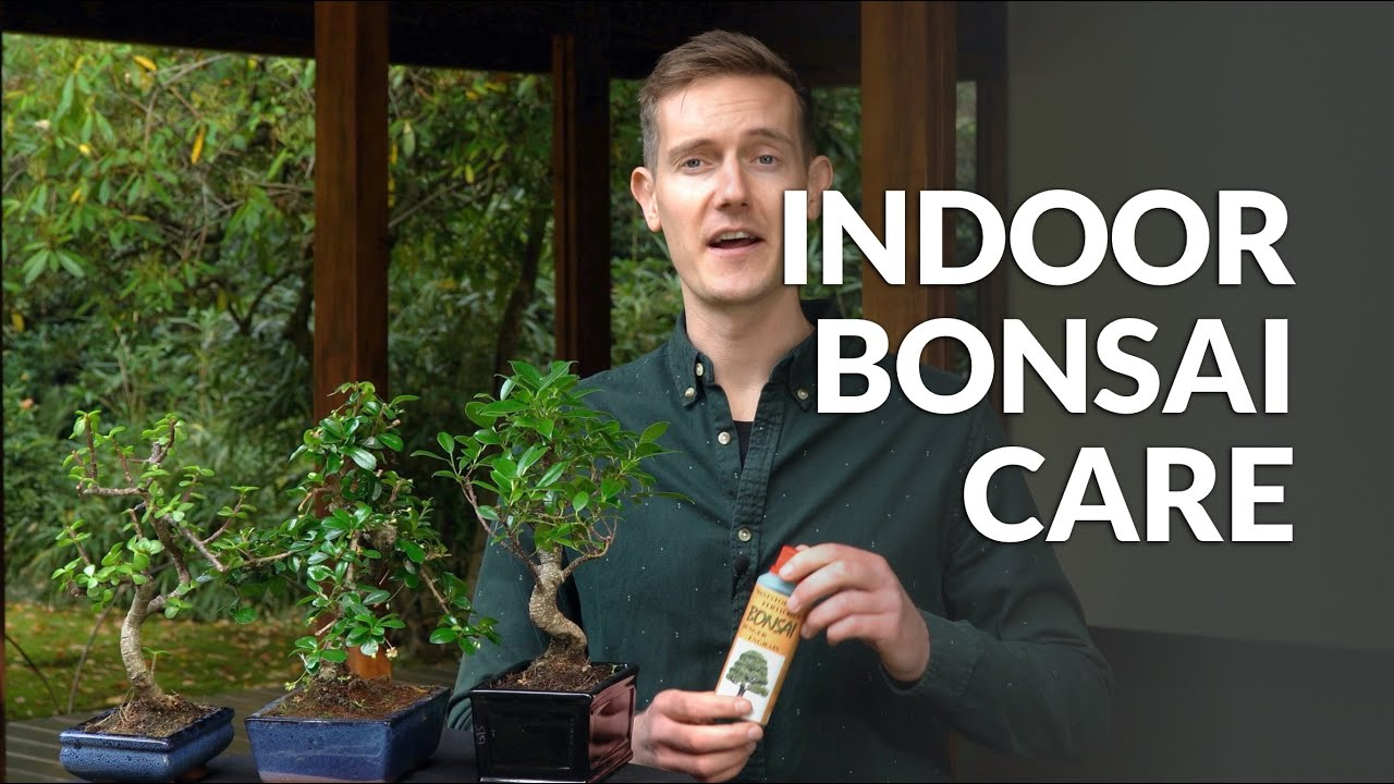 Indoor Bonsai Care Youtube