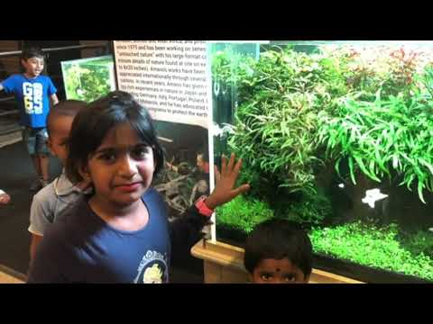 Nature Aquarium Gallery at Orion Mall, Bangalore