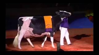 Holstein Québec salue le succès remporté par RF Goldwyn Hailey