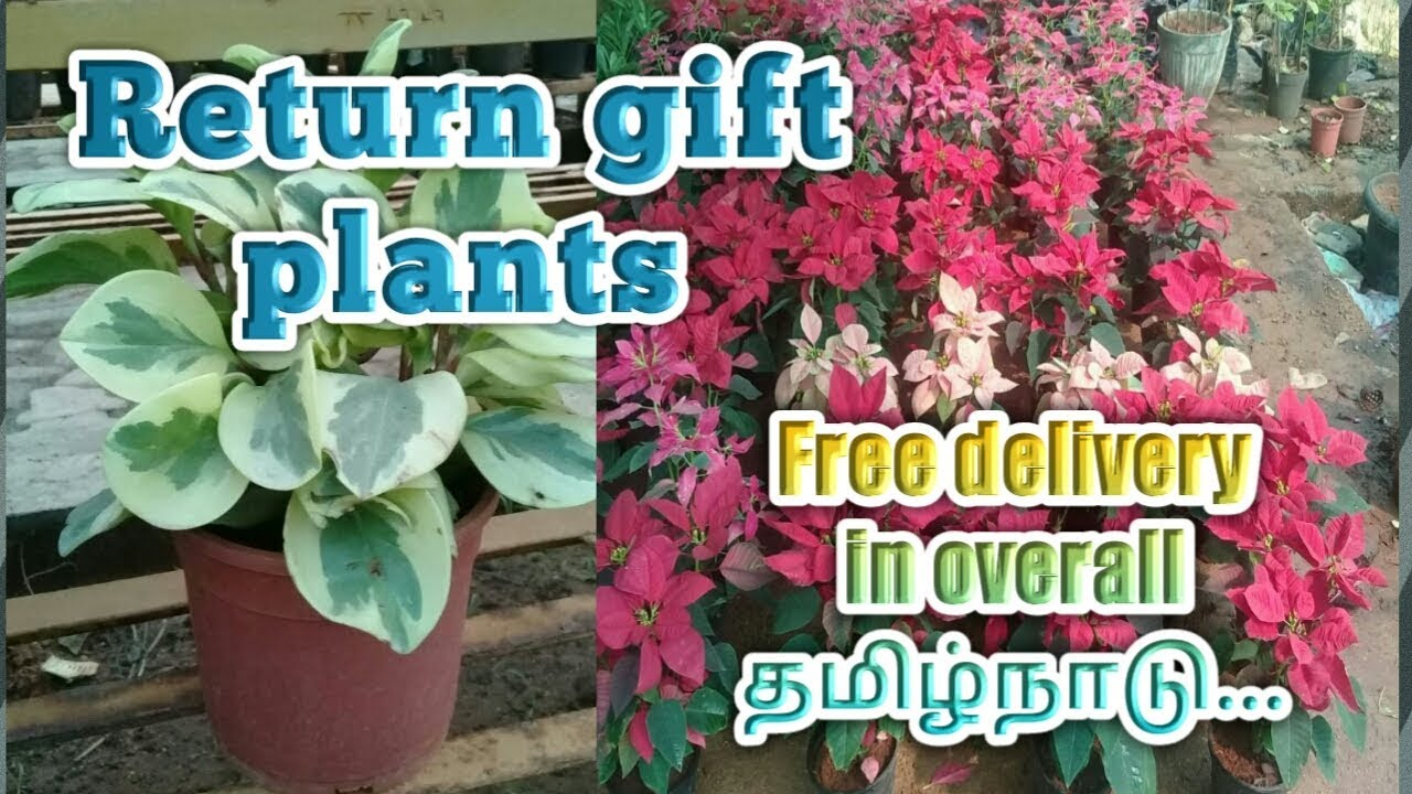 RETURN GIFT IDEAS IN PLANTS