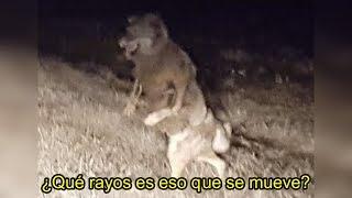 Criatura Mitad Humano y Perro es vista en Bosque de Estados Unidos