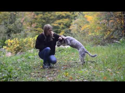 Nyx 6 months Australian Cattle Dog | Tricks & Fun Puppy