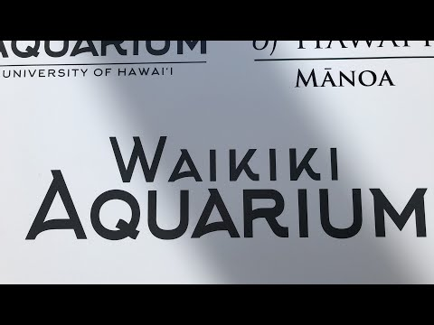 Waikiki Aquarium Tour