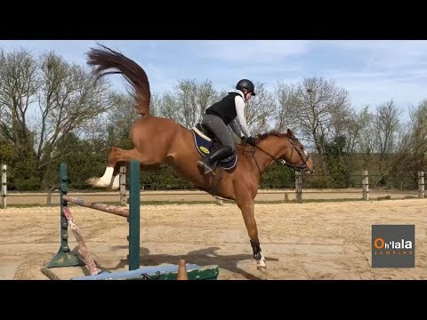 Ckeops - Quaprice BM x Galoubet A - Oh'lala Jumping