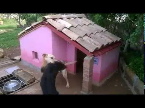 Cuccia Per Cani In Muratura Youtube