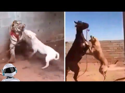 Вопрос: С какой целью создают проблемные породы собак?