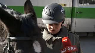 Berittene Polizei: Vorbild München? ORF Wien heute