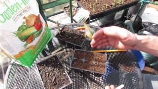 How To Seed Start Kohlrabi: An Amazing Vegetable! - Mfg 2014