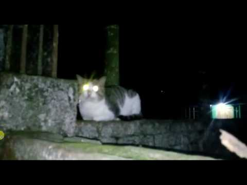 Dangerous cat in a night | One terrible night a cat | Eyes light cat | Best Awesome
