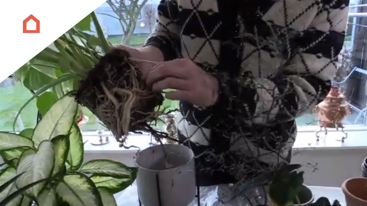 sjove planter til stuen