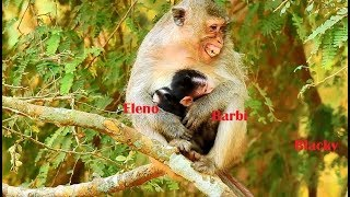 Much pity!Elsa kidnap Barbi away,Blacky very angry scream&fight to get baby,Barbi cry sad scare much