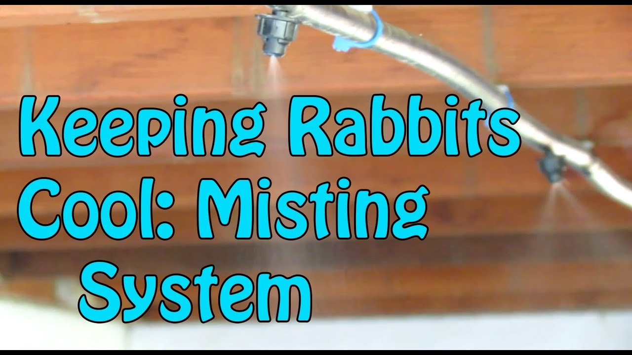 backyard rabbitry keeping rabbits cool in summer youtube