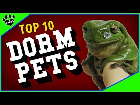 10 Best Pets For College Students - Dorm Room Pets