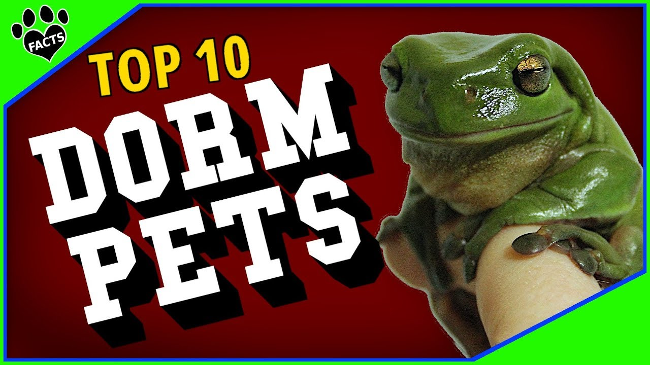 10 Best Pets For College Students Dorm Room Pets Youtube