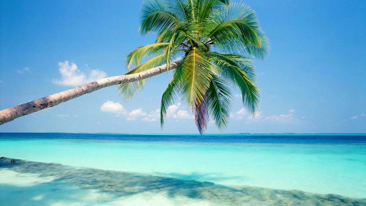 Tropical Island Beach Ambience Sound: Palm Tree In A White Sandy Beach