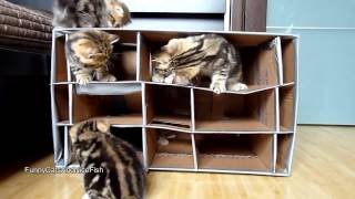 Кошачий дом, Смешные коты, Funny cats, Прикольные, ржачные,веселые коты,кошки ,котята1