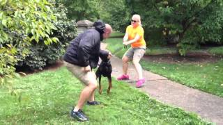 Sneak Attack At  The Park- Obedient Protection Trained Guard Dog