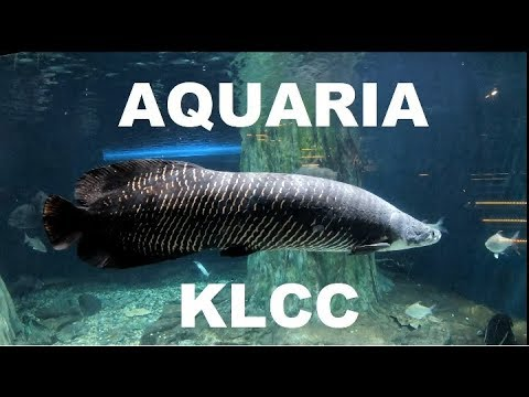 AQUARIA KLCC: Largest Public Aquarium in South East Asia [4K 50fps]