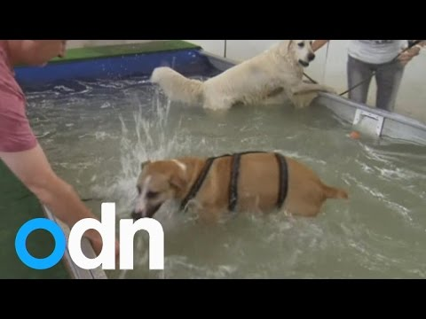 Swimming pool for dogs opens in Germany