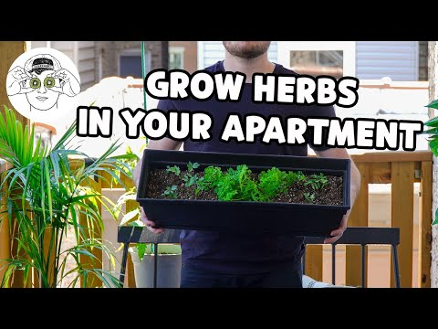 How to Easily Grow Your Own Cooking Herbs