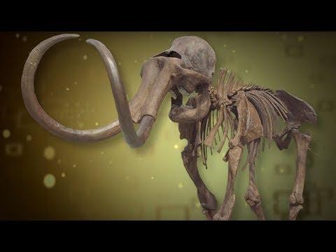 3D Mammoth Bones