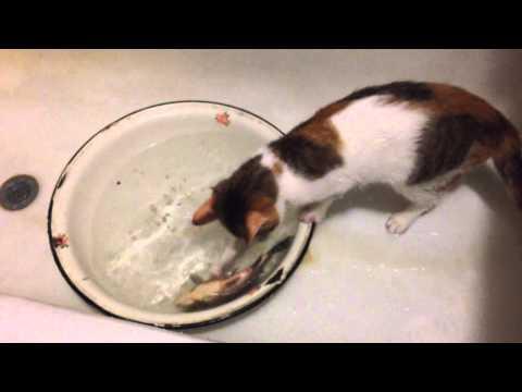 Видео про кошек рыболовов