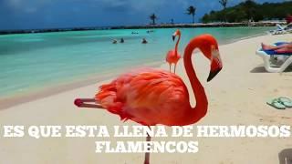 Playa de los flamencos | Aruba