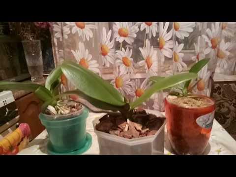 Куда лучше поставить орхидею зимой, а куда летом.
