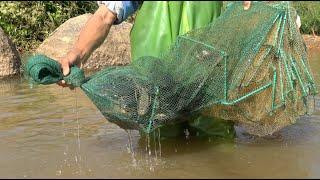 小池抓了很多野生大闸蟹,大鲶鱼也抓一条,清道夫鱼抓到都全埋了