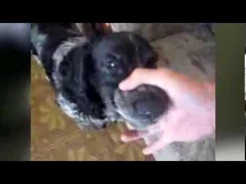 Собака ���и� funnydogtv