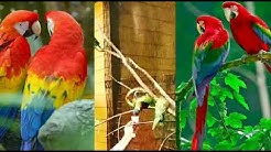 Beautiful Parrots of the Jacksonville Zoo, Florida | Feeding Lorikeets | Parrots | Info Q