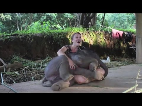 Baby Elephant Surprises Caretaker with a Hug