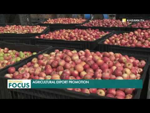 Kazakh agricultural producers increased the exports of goods