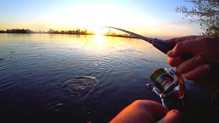 Рыбалка на Оке дала ЖАРУ С берега на спиннинг в поисках трофея