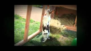 The Rabbit Hutch And Run Of The Year 2011