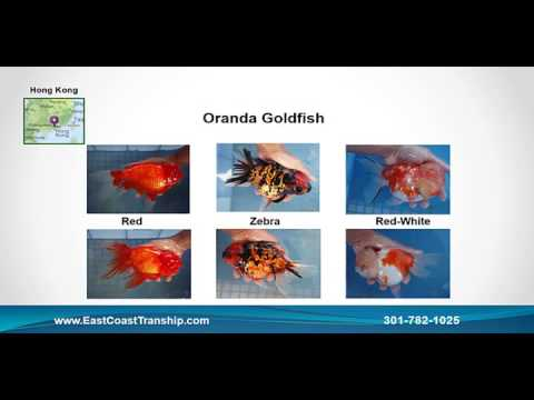 Tropical Fish Wholesale Supplier - Tropical Fish For Pet Store Owners (www.EastCoastTranship.com)