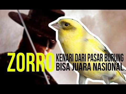 Download Lagu SUARA BURUNG : Kenari Kalitan ZORRO Dari Pasar Jadi Juara Nasional