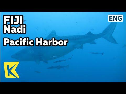 【K】Fiji Travel-Suva, Nadi[피지 여행-수바, 난디]퍼시픽 하버 상어 서식지/Pacific Harbor/Shark/Diver/Diving/Tiger Shark