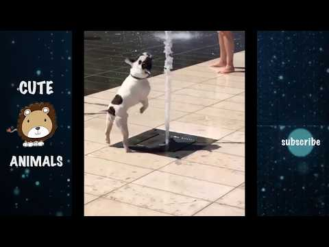 Amazing Dog Playing Water - Try Not To Laugh