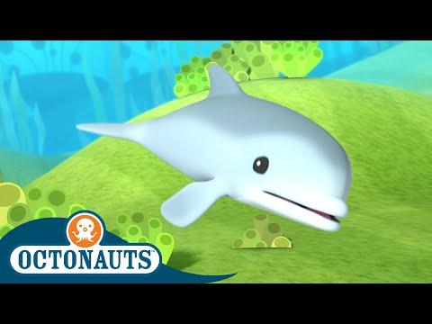 Octonauts - Series 1   Episode 8   Cartoons for Kids   Underwater Sea Education